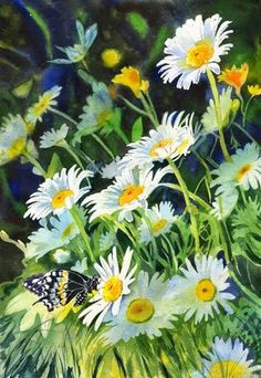 Butterfly Daisy Daisies Floral Art watercolor painting by Rachel Parker