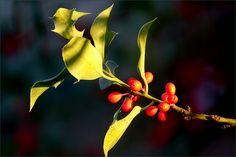 Beeren an einem Zweig - Jahreszeiten - Galerie - Community