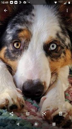 Puppy Sitting, Corgi, Puppies, Animals, Corgis, Cubs, Animales, Animaux, Animal