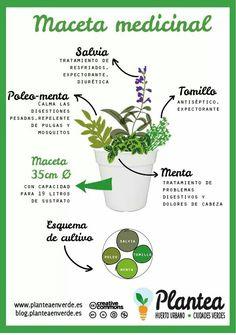 Maceta #aromaticas
