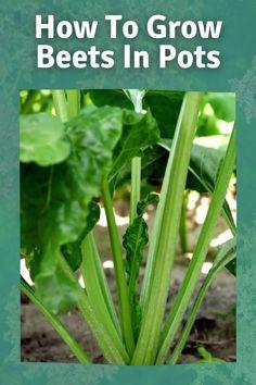Garden Beds, Garden Plants, Veg Garden, Vegetable Gardening, Indoor Garden, Organic Gardening Tips, Easy Garden, Medicinal Plants, Gardening For Beginners