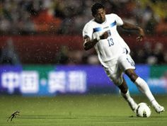 A bullfrog hops on the field as Carlos Costly #13 of Honduras brings the ball up in the rain against the USA at Sun Life Stadium on October 8, 2011 in Miami Gardens, Florida. (Marc Serota/Getty Images)