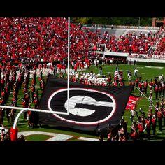 Heaven. Sanford Stadium on football Saturdays in Georgia.