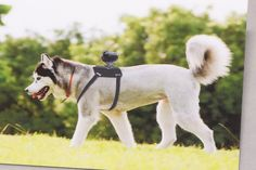 Sony to sell camera mount for extreme dogs