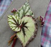 begonia leaf boutonniere