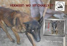 VERMISST- WO  IST CHARLY ??