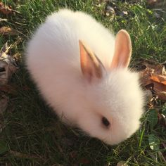 this is bean! -Poetrys: this is bean! Said aaaaaa Tag your friends Photo by by cuteanimalshow Cute Rabbits Sleepy Time 30 Adorable Snoozing Bunnies Bunny wedding theme Cute Creatures, Beautiful Creatures, Animals Beautiful, Fluffy Bunny, Cute Baby Bunnies, Cute Babies, Fluffy Animals, Animals And Pets, Farm Animals