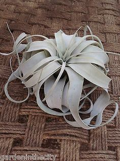 Airplant #followitfindit