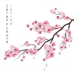 Buy Realistic Sakura Branch by macrovector on GraphicRiver. Realistic sakura japan cherry branch with blooming flowers vector illustration. Editable EPS and Render in JPG format Cherry Blossom Drawing, Cherry Blossom Vector, Cherry Blossom Background, Cherry Blossoms, Cherry Blossom Branches, Cherry Blossom Pictures, Cherry Blossom Watercolor, Branch Drawing, Branch Vector