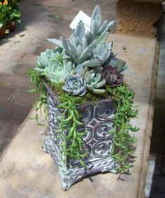 interessant fettpflanzen verzierung garten