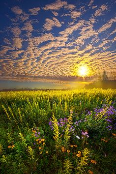 Seeds of beauty become the field of dreams - for you to watch how they grow.