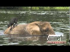 Elephant and Dog - Bubbles and Bella Best Friends - YouTube