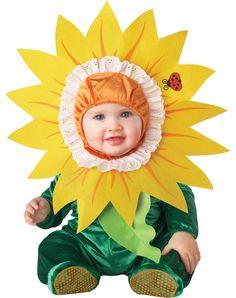Sunflower for Lillian