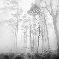 White Forest by Hengki Koentjoro, via Flickr