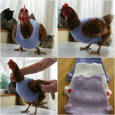 Well now I need a chicken. @kristenengland