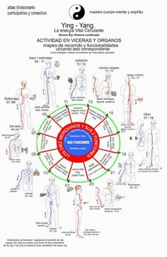 Meridianos Meridian Acupuncture, Acupuncture Points, Acupressure Points, Tai Chi Qigong, Traditional Chinese Medicine, Yin Yoga, Ayurveda, Body Clock, Body Works
