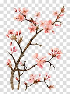 Peach Blossom Tree, Cherry Blossom Images, Cherry Blossom Drawing, Cherry Blossom Watercolor, White Cherry Blossom, Cherry Blossom Flowers, Blossom Trees, Watercolor Flowers, Drawing Drawing