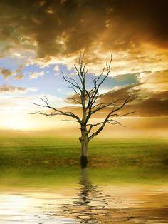 ✯ Sunset Tree