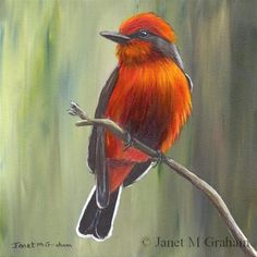 "Daily+Paintworks+-+""Vermilion+Flycatcher""+-+Original+Fine+Art+for+Sale+-+©+Janet+Graham"