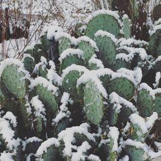 17 Hermosas imágenes de las nevadas en México que te dejarán frío