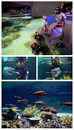 Hundreds of fish were just introduced to their new home, our Blacktip Reef exhibit!