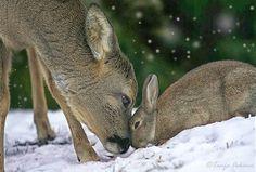 Amistad entre un conejo y un ciervo