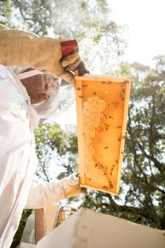 Chef Daven Wardysnki tending to the honeycombs at Omni Amelia Island Plantation Resort. The bee colonies are home to over 2.5 million bees.