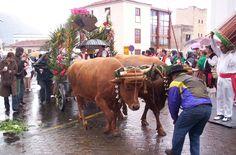 Tenerife Fiestas in January 2017