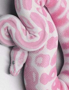 This is an albino corn snake. I will not have any of snake breeds as a pet. They are kind animals though, deadly as they are created. They belong to the wild no Pretty Snakes, Cool Snakes, Colorful Snakes, Beautiful Snakes, Amazing Animals, Animals Beautiful, Cute Animals, Pink Animals, Nature Animals