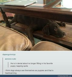 "dapenguinninja: ""awwww-cute: ""He is in denial about no longer fitting in his favorite puppy napping spots "" i think dogs always see themselves as puppies and that is heartwarming "" his back legs😂😂😍 Cute Funny Animals, Funny Cute, Funny Dogs, Hilarious, Animals And Pets, Baby Animals, Cute Puppies, Cute Dogs, Pugs"