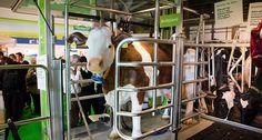 Das Kuh Mobil – soviel Platz hat eine Kuh | Moderne Milchviehhaltung entdecken | Forum Moderne Landwirtschaft