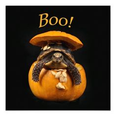 Halloween Turtle in Jack O Lantern Custom Announcement $2.35  ~This design also available on other items at Zazzle.com/rebeccabrittain ~ 2013 Rebecca Brittain Photography