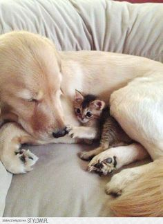 Friends kittens cutest, cats and kittens, cute cats, 15 dogs, dogs and pupp Cute Baby Animals, Animals And Pets, Funny Animals, Wild Animals, Tier Fotos, Baby Dogs, 15 Dogs, Doggies, Cute Animal Pictures
