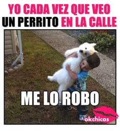 20 funny dog memes that will make you cry with laughter - Meme okchicas de parritos - Funny Spanish Memes, Funny Dog Memes, Spanish Humor, Funny Dogs, Chesire Cat, New Memes, Animal Memes, Funny Animals, Relationship Memes