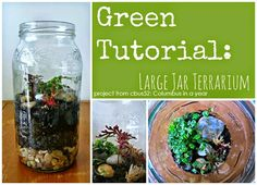 Get your gardening fix - even when the weather is cold- by making a terrarium from an old jar following this tutorial