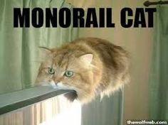 funny cats - Hledat Googlem