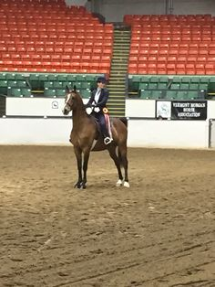 """Waiting for their victory pass.  Rimfire and his rider, Rachel, enjoy some time in the spotlight.  Rimfire is one of the horses who stars in the """"Morgan Horse"""" series by Ellen Feld."""