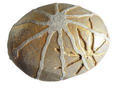 Neurona daurada