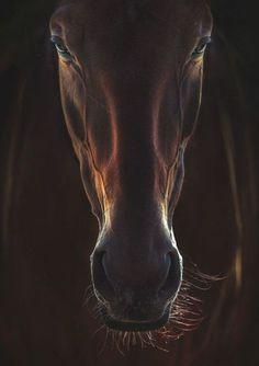 Wild Animals Photography, Close Up Photography, Equine Photography, Wildlife Photography, White Photography, Most Beautiful Horses, Pretty Horses, Animals Beautiful, Cavalo Wallpaper