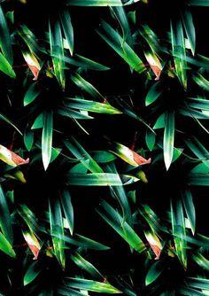 Tropical inspired print by Daniel Moraes Textile Patterns, Cool Patterns, Print Patterns, Textiles, Tropical Design, Tropical Pattern, Tropical Prints, Tropical Art, Tropical Leaves