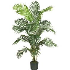 Nearly Natural 6' Paradise Palm Silk Tree (765 CNY) ❤ liked on Polyvore featuring home, home decor, floral decor, plants, fillers, tropical trees, nearly natural, tropical palms, tropical home decor and faux trees