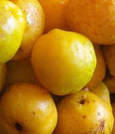1000+ images about Chaenomeles on Pinterest | Chaenomeles ...