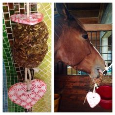 Horse hanging stall treat  Peppermint ornaments and baked treats on a rope . Hang up in stall and watch them play ! Baked treat recipes are pinned on my horse treats board the larger you make them the longer you need to bake it. the link below is how to make the ornaments (Very easy and lots of fun)
