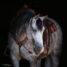 American Quarter Horse, Horse Girl, Horse Tack, Beautiful Horses, Artwork, Animals, Image, Ranger, Beauty
