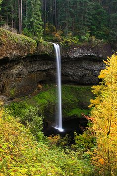 Silver Falls, near Salem Oregon, USA This is the South Falls and you can walk behind it. There are multiple beautiful waterfalls on a several mile hiking trail. I never made it to see all of them. Salem Oregon, Oregon Usa, The Places Youll Go, Places To See, Silver Falls, Silver Creek, All Nature, Beautiful Waterfalls, The Great Outdoors