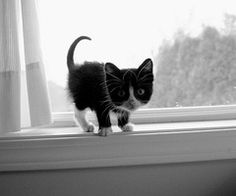 black and white kitties are the best