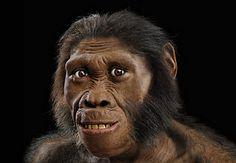 australopitecus sediba