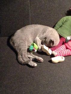 Felix sover med sin lille grønne fugl