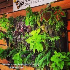 Follow us on Instagram @wallpots #LivingWall #VerticalGarden #GreenWalls #Livewall
