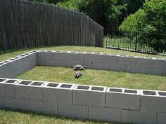 The torties are outside! In May we finally built an outdoor Tortoise Habitat! we bought 52 cinder blocks and just lined them up. Tortoise Cage, Tortoise As Pets, Tortoise House, Tortoise Food, Tortoise Habitat, Sulcata Tortoise, Giant Tortoise, Box Turtle Habitat, Turtle Enclosure
